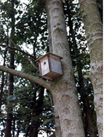 bird box in tree